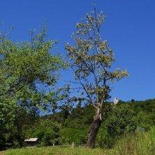 Ruderi Monastero degli Olivetani visti dal giardino botanico