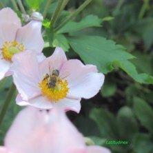 fiori e insetti ai Giardini di Castel Trauttmansdorff
