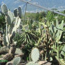 piante succulente Giardini di Castel Trauttmansdorff