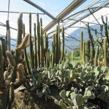 zona delle piante succulente Giardini di Castel Trauttmansdorff