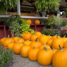 Appleseed Fair Phillipston Massachusetts- Credit MOTT