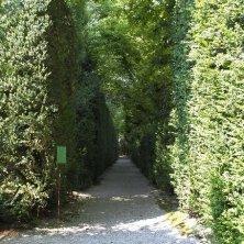 Giardino di Valsanzibio_Viale di bosso_EVallarin