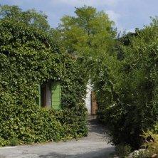 Alberi di Giuggole nei giardini di Arquà Petrarca_EVallarin