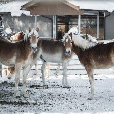 Kufsteinerland Winter_Ebbs_(c) VAN MEY Natale in maneggio in