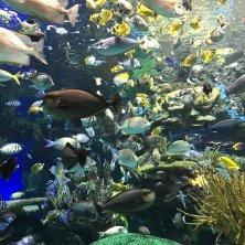 Toronto Acquario pesci TZN_sara RVC 2019 3