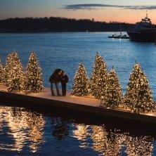 alberi di Natale sull'acqua