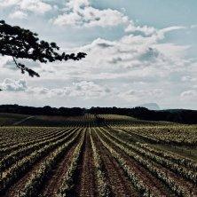 Vignes et Pic St Loup© Marie Frayssinet