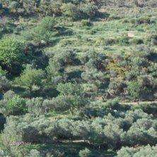 uliveti olio a Creta