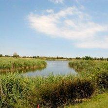 Albarella_laghetto del campo da golf_phVGaluppo