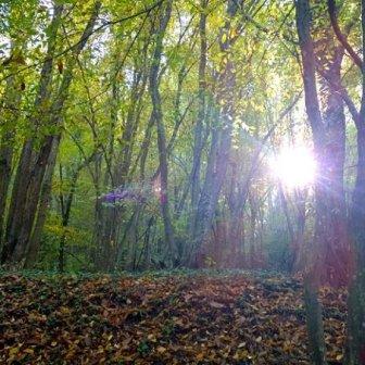 luce d'autunno a Monterano