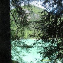 visioni tra gli alberi del lago di Braies