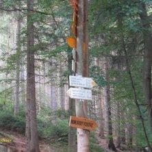 indicazioni percorsi nel bosco per la cascata