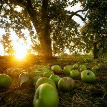 Apple harvest Halloween Irlanda