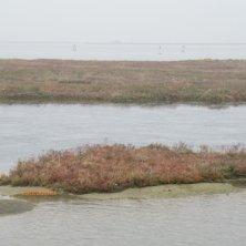 barene nella laguna di Venezia