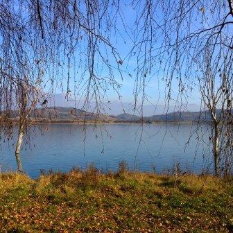 alberi al lago di Canterno