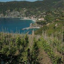 Monterosso viti Cinque Terre