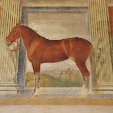 cavalli Gonzaga palazzo Te