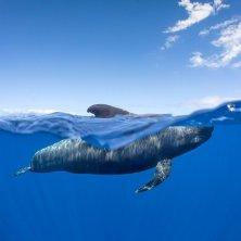 balena a filo d'acqua Cetáceos fotografía Francis Pérez