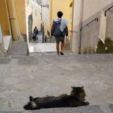 salite con gatti nel borgo