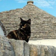 gattina in posa davanti ai trulli