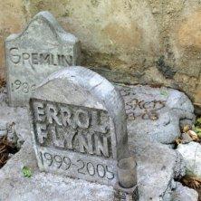 cimitero felino nella casa di Hemingway