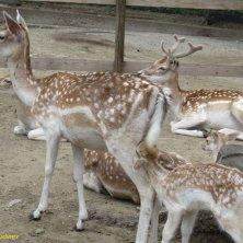 animali parco Pallavicino