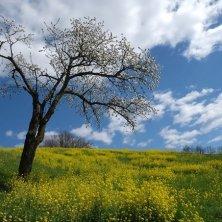 campagna montesina