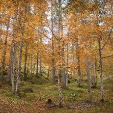 Val di Zoldo_foliage@Consorzio Val di Zoldo turismo autunno in Val di Zoldo