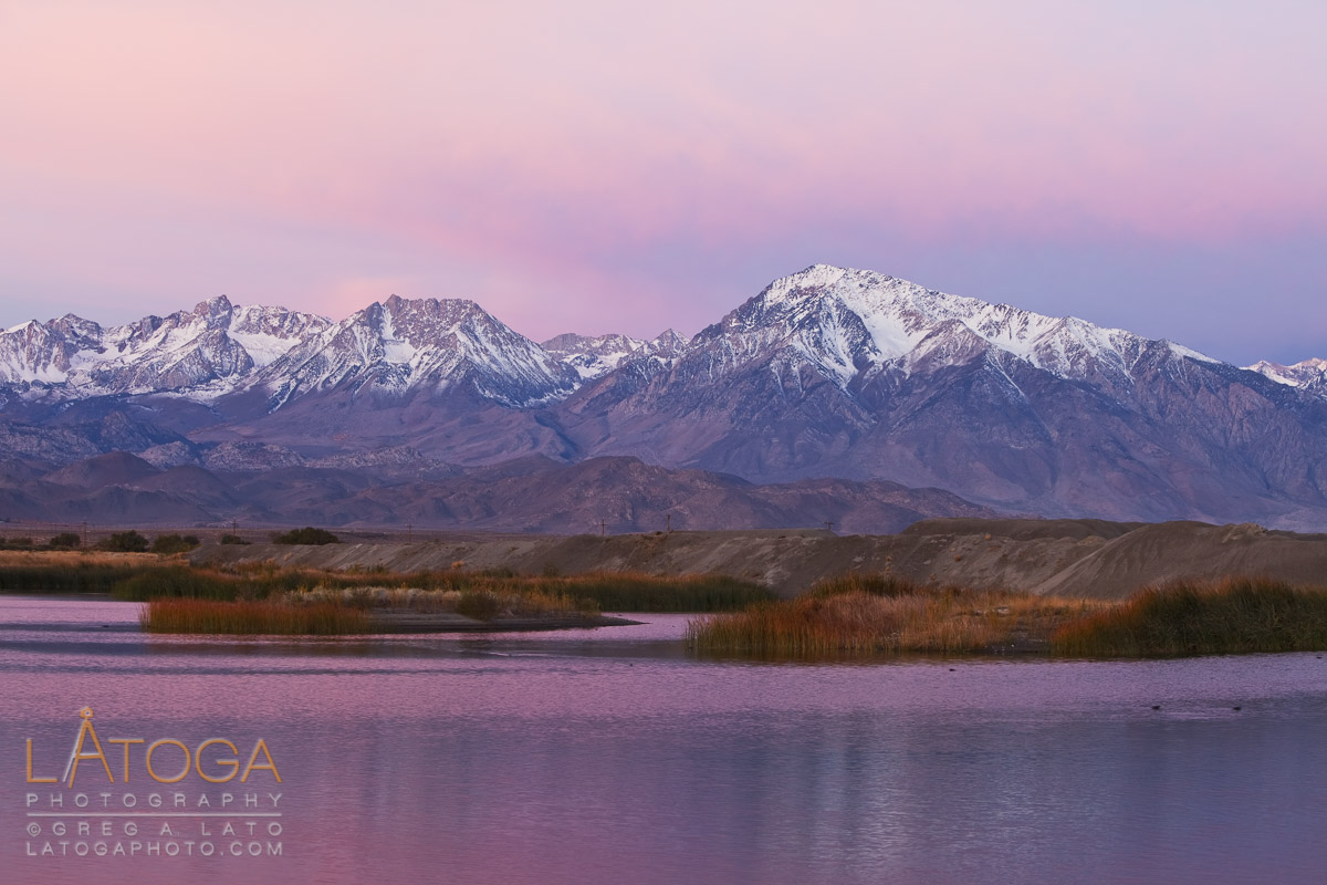 Mount Tom and an Owen Valley duck pond basked in the pre-dawn alpenglow near Bishop, California.