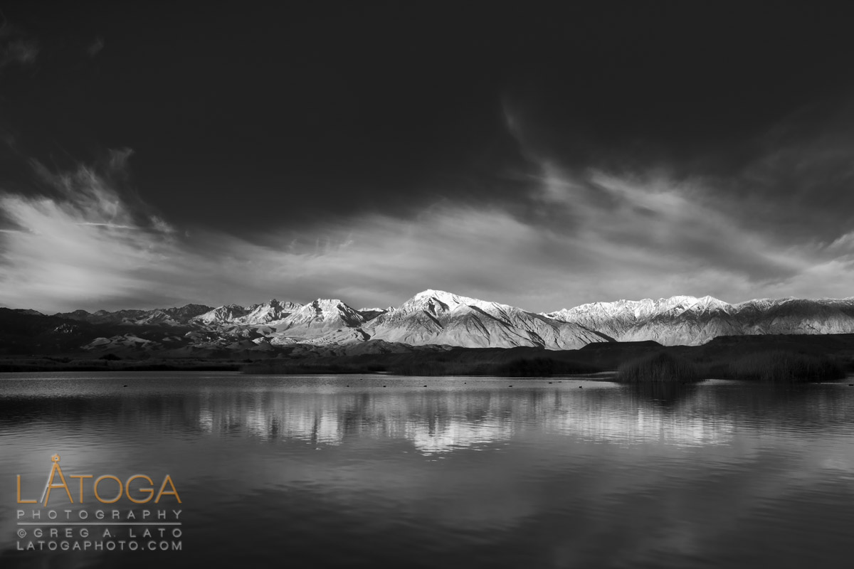 Early morning reflection of Mount Tom and Round Valley Peak in a duck pond north of Bishop, CA. (Black & White)