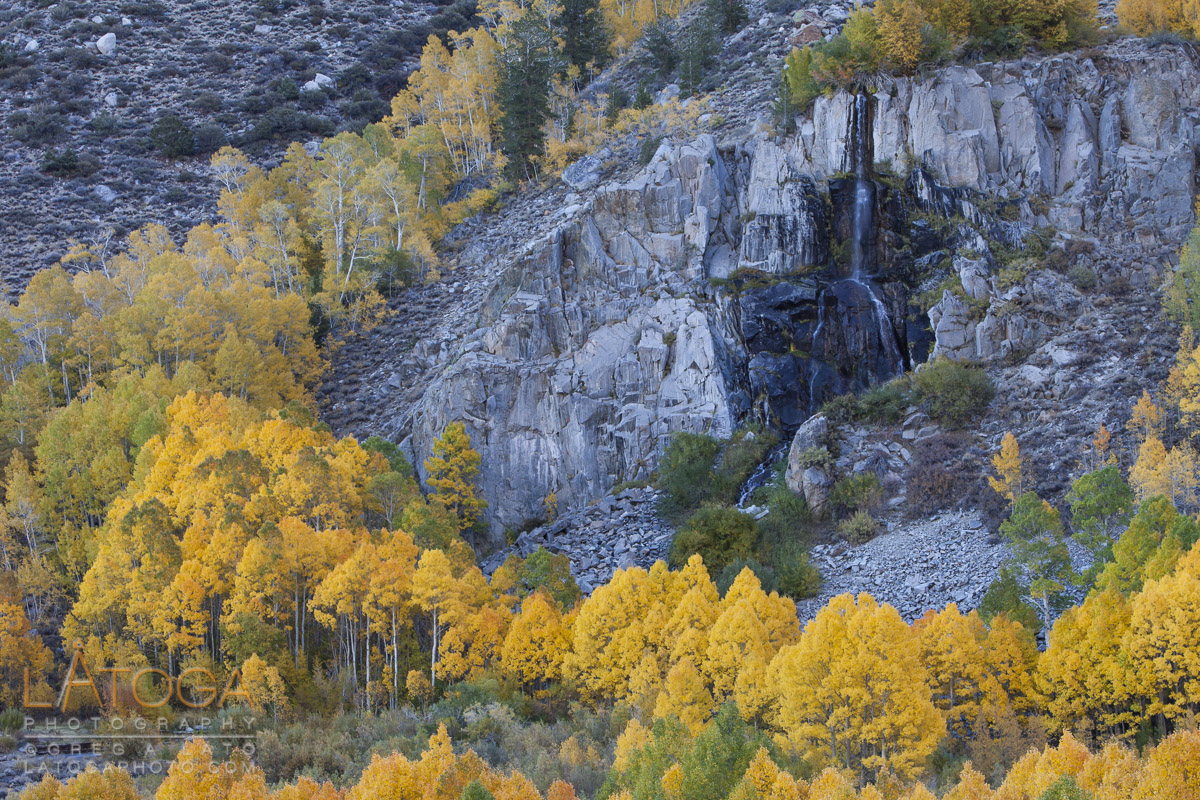Yellow aspen ring a water fall along the South Lake Road near Bishop, California.