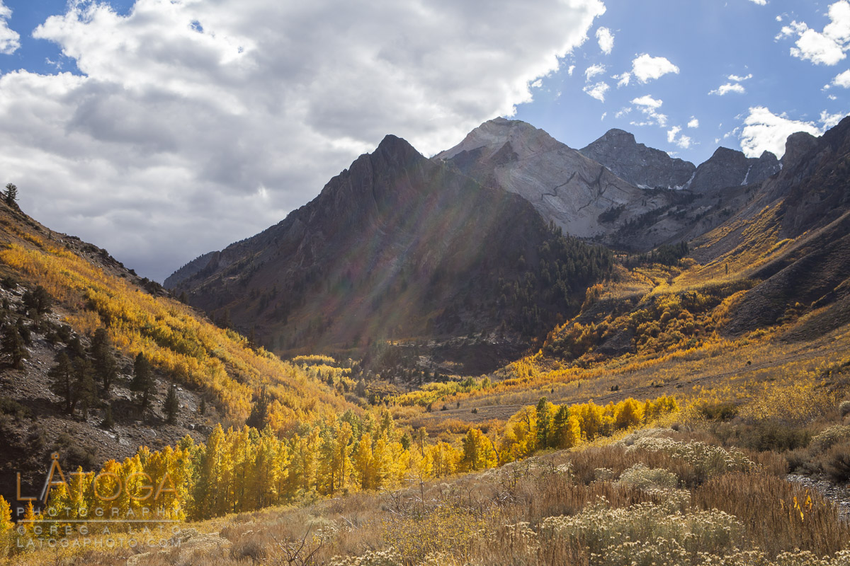 A beam of sunlight strikes Aspen in their Autumn glory within McGee Creek Canyon in Mono County, California.