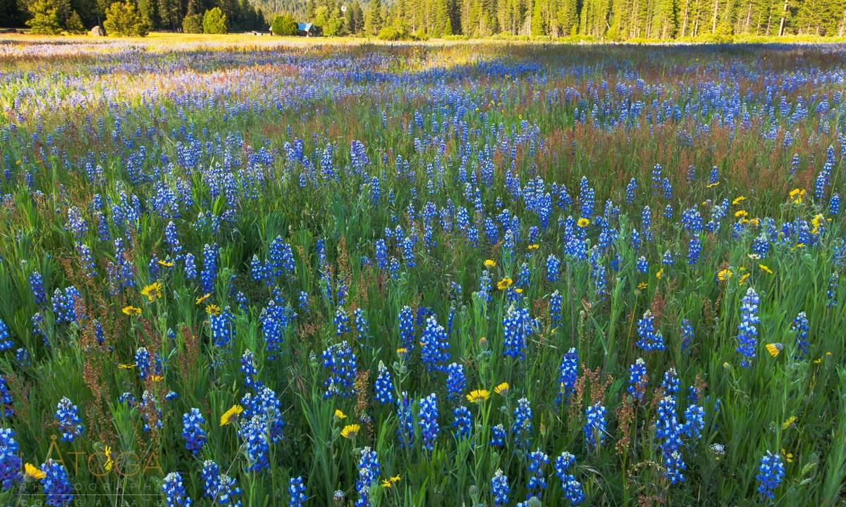 Dreaming of Spring Wildflowers