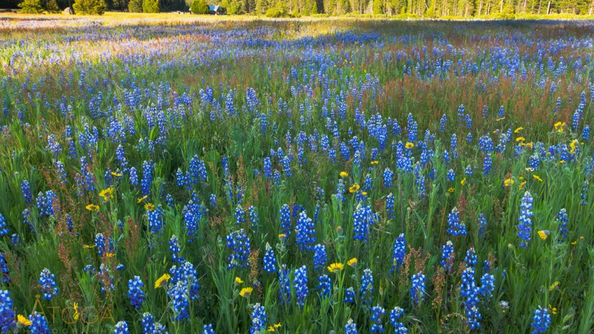 Dreaming of Spring Wildflowers