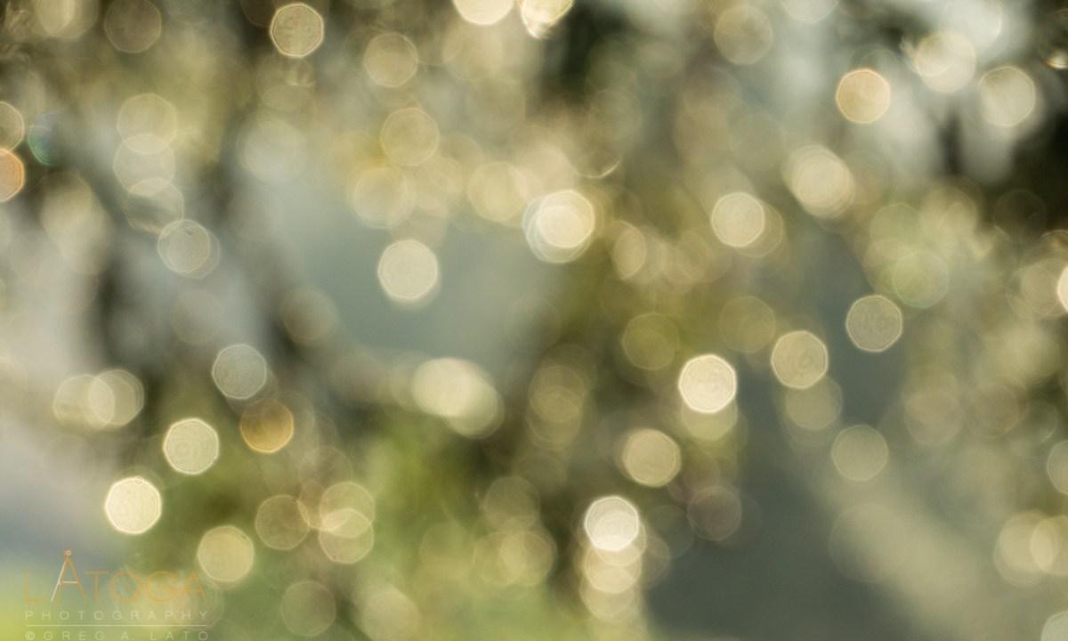 Raindrops Sparkle on Redwood Trees at Sunrise