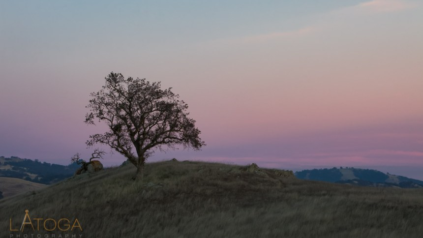 Oak Tree on hillside at Twilight