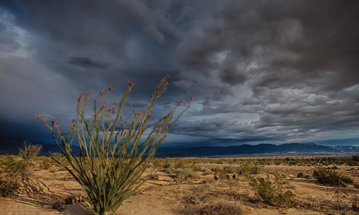 Magic of the Desert