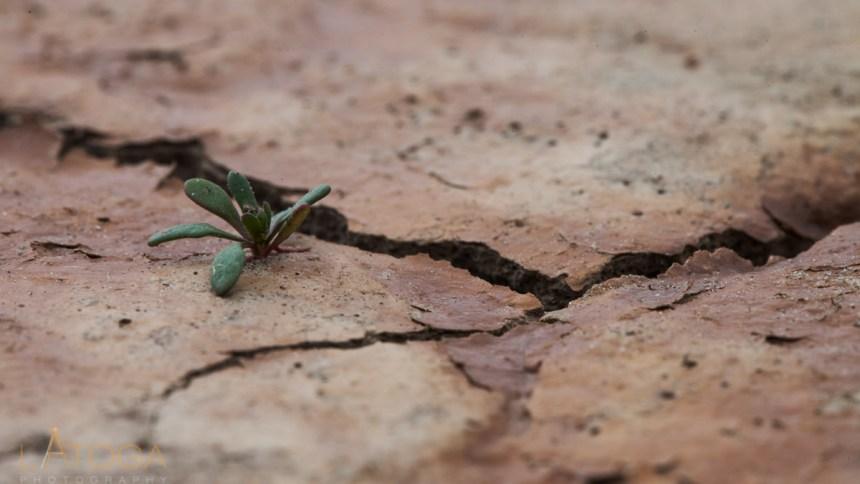 Desert Struggle for Life