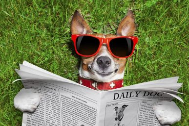 dog reading paper - Newsletters