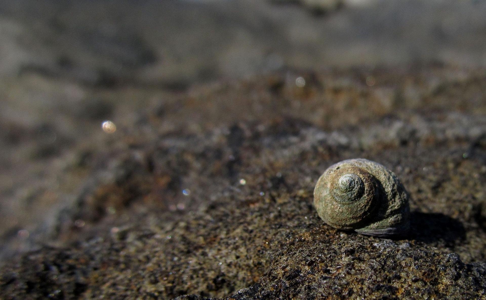 shell-987602_1920