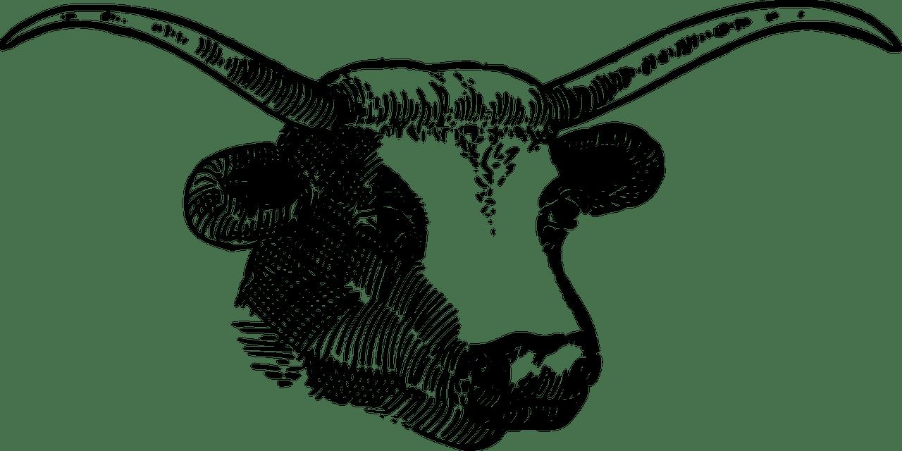 animal-1293780_1280