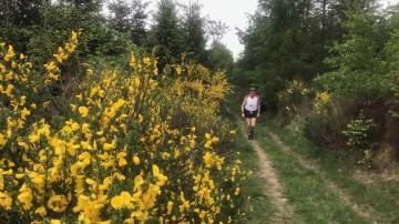 Ein Läufer in der Natur.