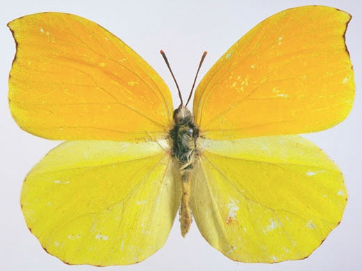 Butterfly With Spots Removed