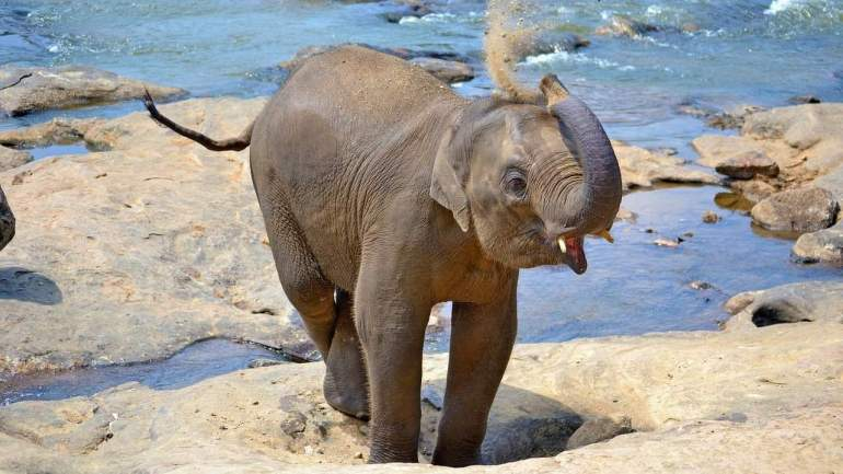Funny puns about elephant