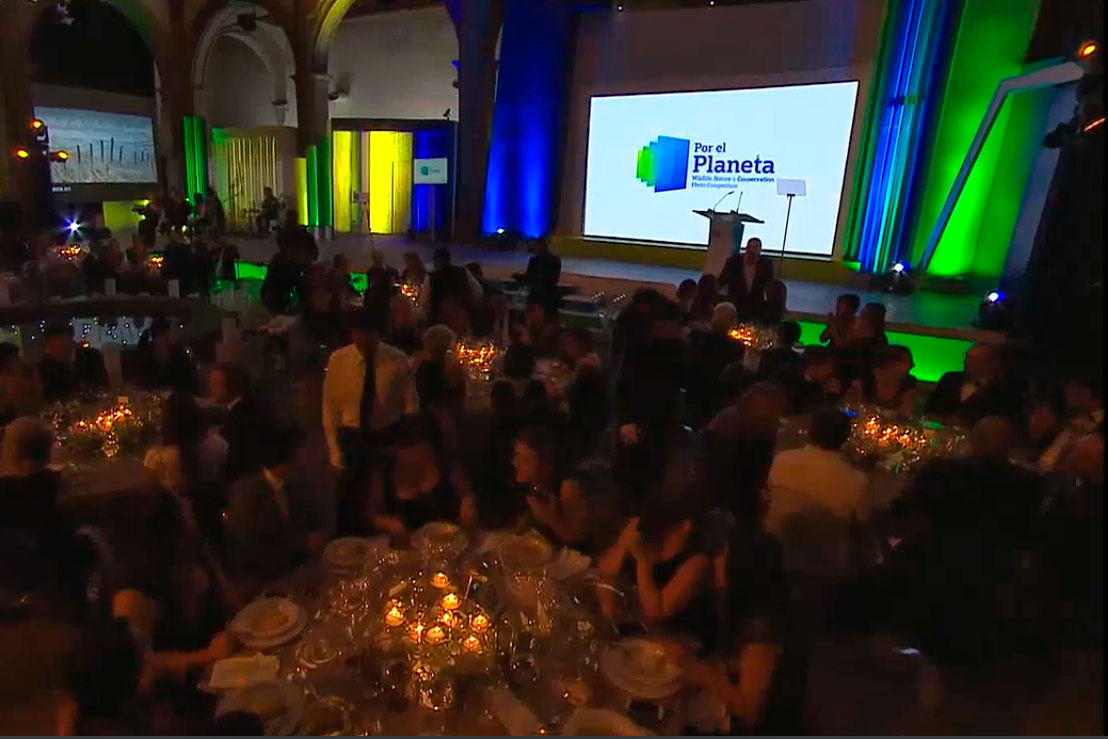 "A screenshot from the live stream of the Por el Planeta Awards Ceremony showing Josiah's ""Snowy Snowy"" image on the big screens"