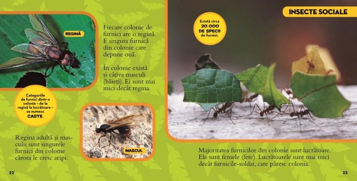 marea-enciclopedie-despre-insecte_2