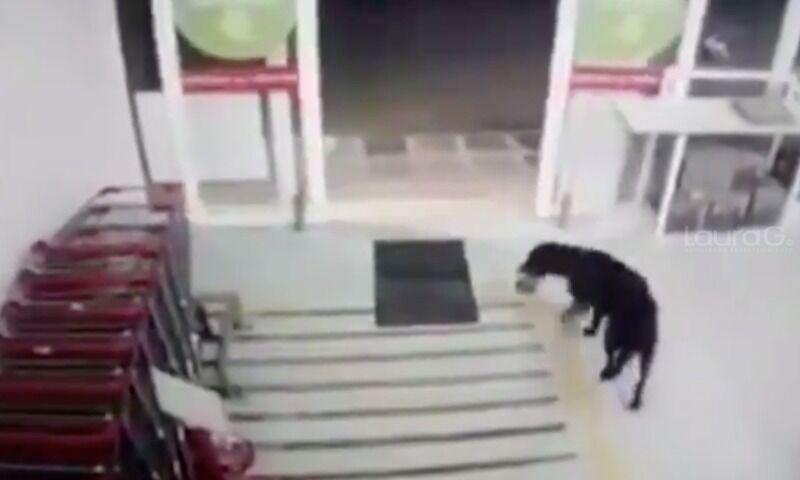 perrito-sanitizante