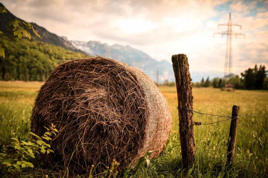 hay beside brown wood slab