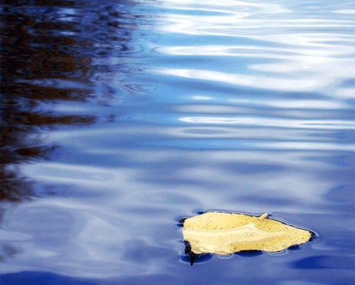 Laura Henderson Counseling – leaf floating in water