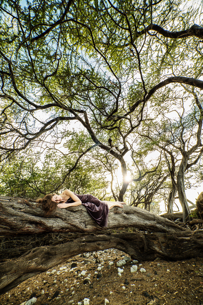 Tree Dreaming